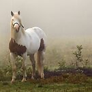 the horse, the fog and the bog... by gregsmith