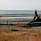 Parksville Beach - Beach & Stump by rsangsterkelly