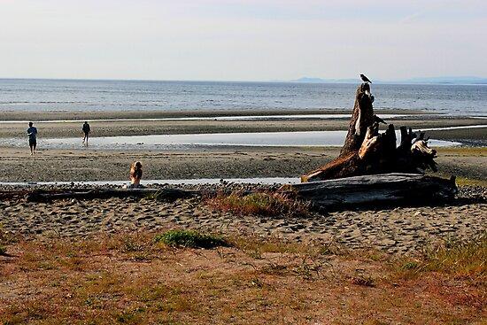 Parksville Beach - Beach & Stump by rsangsterkelly