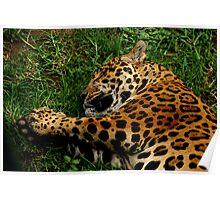 Sleeping Jag Poster