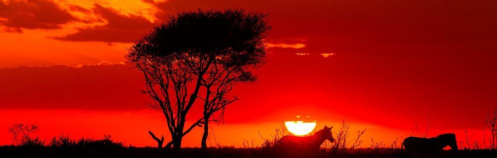 Zebras at sunset by arodericks