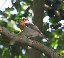 ROBIN IN HOLLY TREE by Gea Austen