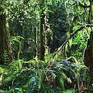 Cascade Rain Forest  by Mike  Kinney