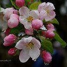 Blossom Time by DavesPhoto