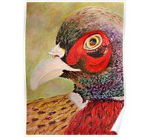 A Pheasant Portrait Poster