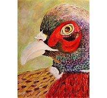A Pheasant Portrait Photographic Print