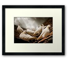 White Doves Framed Print