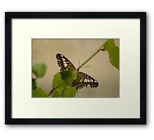 Clipper Butterfly Framed Print