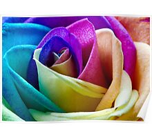 Multi Coloured Rose Poster