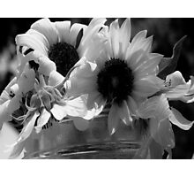 Sunflowers in Grayscale Photographic Print