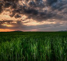 Green, Red and a Lonely Tree on the Far Right by Marco Romani