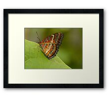 Lacewing Buterfly on leaf Framed Print