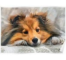 Sheltie In Bed Poster