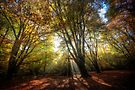 Sun Rays by Nigel Bangert