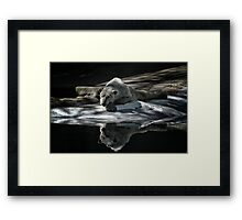 A Polar Bear Reflects Framed Print