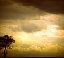 ode to a tree (series) by Angelika Sielken
