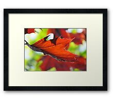 Catch me Framed Print