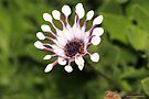 macro flora 034 by Karl David Hill