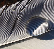 Feather V by geophotographic