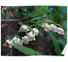 Tinkling Lily of the Valley bells Poster