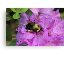 Bumble Bee on Rhododendron Canvas Print