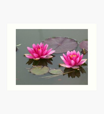 Water LIly Two Art Print
