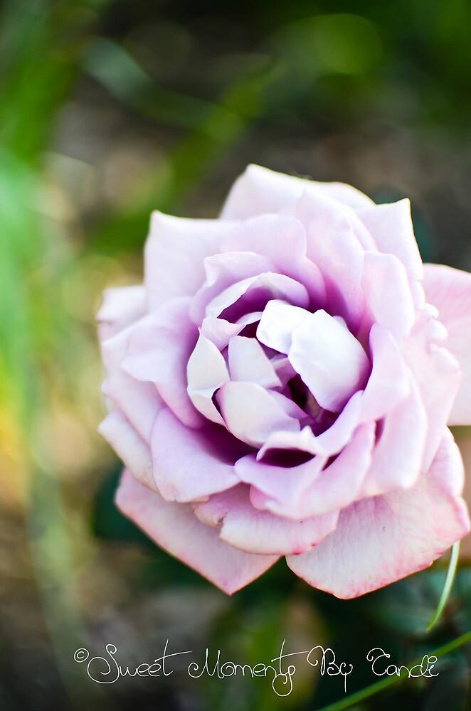 Romance in Purple I by CandiMerritt