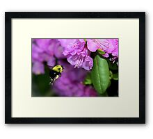 Flying Bumble Bee Collection Pollen Framed Print