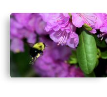 Flying Bumble Bee Collection Pollen Canvas Print