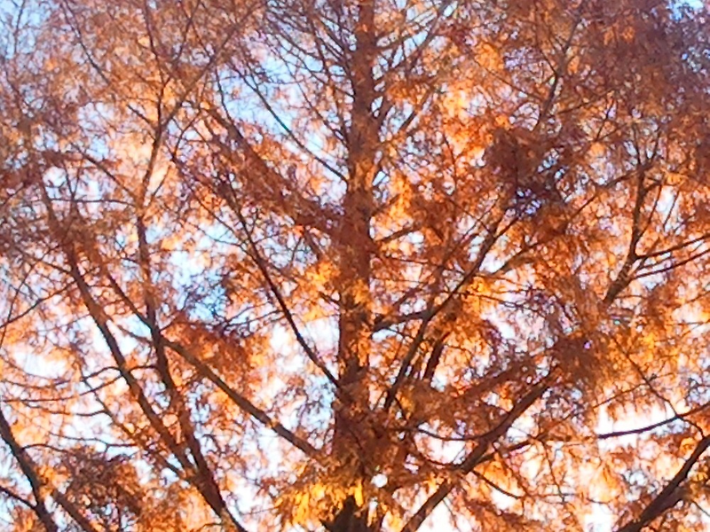 Big Yellow And Brown Autumn Tree by kahoutek24