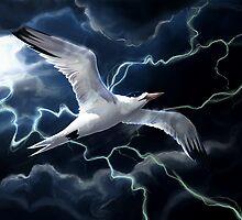 Storm Bird by Ashley Dadoun