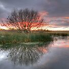Lake Wendouree sunrise. by trevorb