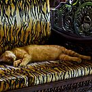 HIT THE SACK! by Karen Stackpole