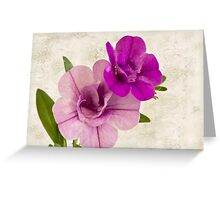 Calibrachoa Petunia Blossoms - Macro Greeting Card