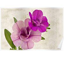 Calibrachoa Petunia Blossoms - Macro Poster