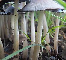 Mushrooms In the Garden by Amanda Bentley Graphic Design & Photography