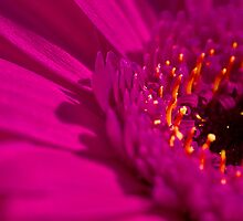 Flower by Tri-podd