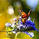 Monarch refuelling by john  Lenagan