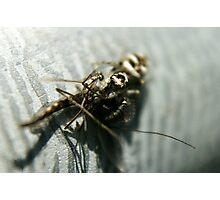 Jumping Spider Caught It's Prey Photographic Print