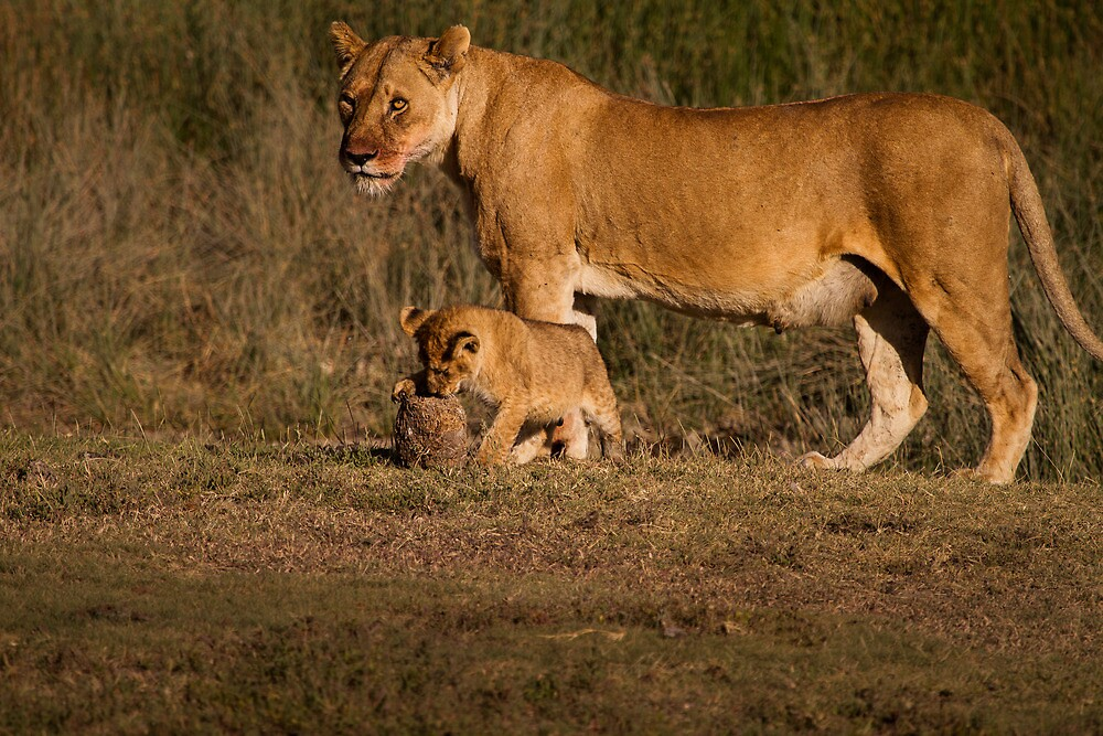 Look mom! by arodericks