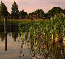 Reeds In The Evening Breeze by herbspics