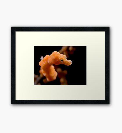 Denise Framed Print