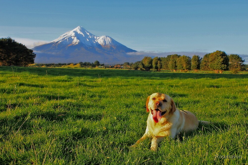 """""""Mount Taranaki looks more beautiful when I am lying in front of her"""" by Rosehaven"""