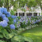 Martha's Vineyard Hydrangeas by Joan Harrison