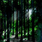 Forest by elainemarie999