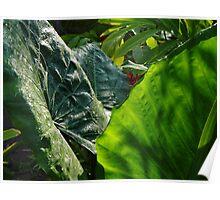 Green Plants - Plantas Verdes Poster
