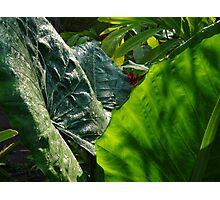 Green Plants - Plantas Verdes Photographic Print