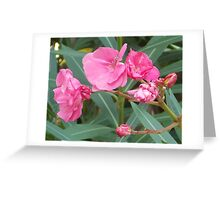 Oleander Greeting Card