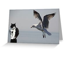 Cat and Seagull, Portpatrick, Scotland Greeting Card