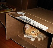 ~ if I'm in here they can't use the box! ~ by Nadya Johnson